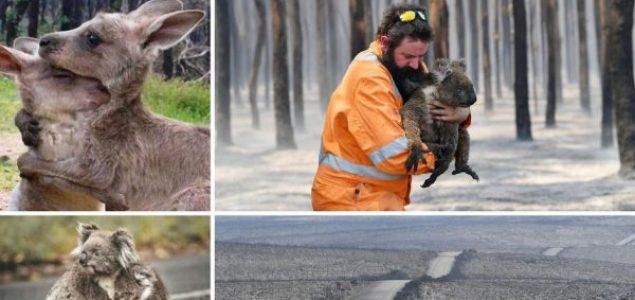 Dom koala prije i poslije požara – pakao ga je potpuno izbrisao