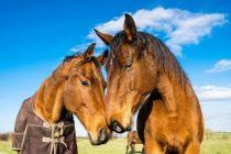 Empatija kod životinja češća nego što se prije mislilo