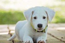 Šta uraditi kada ste u karantinu sa svojim psom i ne možete ga izvesti u šetnju?