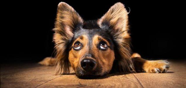 Ovaj savjet će vam pomoći ukoliko vaš pas ostaje tužan kada napuštate kuću