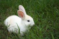 Ova zemlja je zabranila testiranje kozmetike na životinjama: Je li to moguće i kod nas?