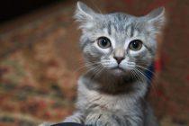 Zabilježen prvi slučaj: Vlasnik prenio koronavirus svojoj mački