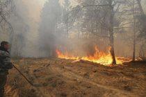 Velik šumski požar u okolini Černobila ne jenjava