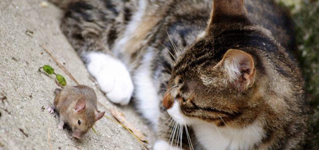 Životinje i njihova prava
