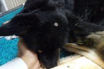Psi su krivi što su živi: Ekser za u glavu keruše Kaje
