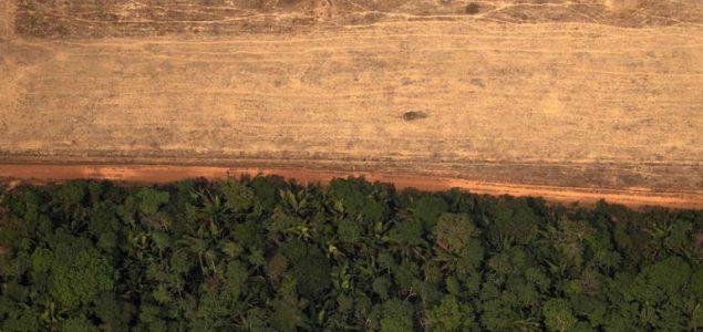Svakih šest sekundi bude uništena prašuma veličine nogometnog igrališta