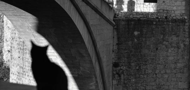 """Izložba fotografija """"Ljepota različitosti"""" autorice Sonje Marić u Centru za kulturu Mostar"""