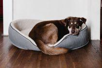 Što je zapravo rep psa i čemu služi?