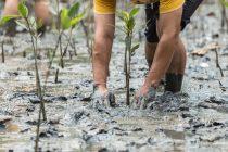 Rešenja zasnovana na prirodi: Kako mogu da nam pomognu da zaustavimo klimatske promene?