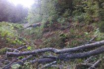 Udar na prirodni dragulj u Kantonu Sarajevo: Sječa šume na izvoru Rakitnice