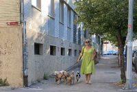 Nijemci će zakonski morati šetati pse barem dva sata u danu