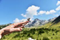 Pozdrav planinama – Čvrsnica, Vran, Prenj