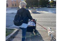Evo zašto nikad ne biste trebali požurivati svog psa tijekom šetnje