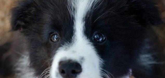 Ovo su najpametnije pasmine pasa na svijetu