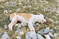 U prirodnom parku Fortica pronađeni upucani i otrovani psi