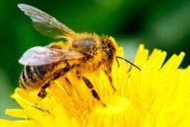 Smanjenje populacije pčela