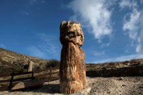 Lezbos: Fosilni ostaci drveta starog 20 miliona godina