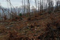 Gacko: Bespravna seča odnela i šumu i pare