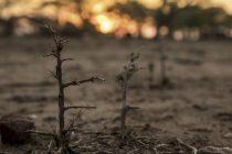 Guterres: Crveni alarm za planetu