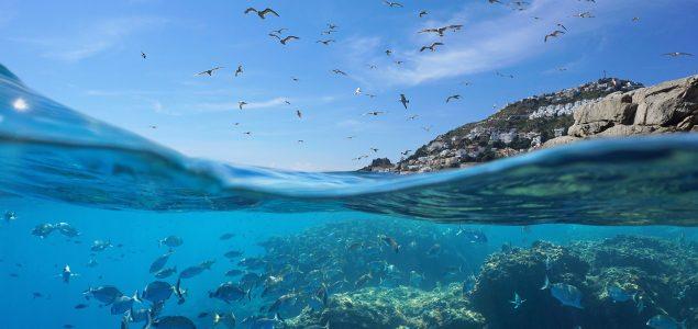 Za oporavak zaliha ribe treba zaštititi 30 posto Mediterana