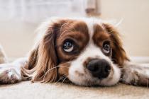 Studija pokazala pas je čovjekov najbolji prijatelj već hiljadama godina