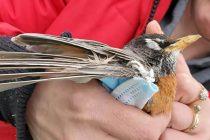 Zarobljeni u rukavicama, upleteni u maskama: Zaštitna oprema protiv Covida-19 ubija životinje, stoji u izvještaju
