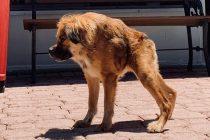 Zbog rijetke bolesti htjeli su ga uspavati, no danas ovaj pas živi najsretniji život
