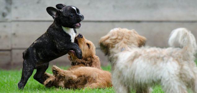 Zlatni omjer presudio: Ovo su 10 uvjerljivo najslađih pasmina