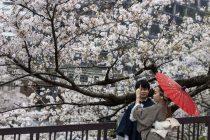 Vesnik klimatskih promena: Trešnjin cvet u Kjotu procvetao najranije do sada