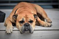 Pet načina na koje ćete vašem psu pokazati da ga volite