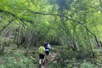 Šumska područja veličine Francuske u zadnjih su se 20 godina prirodno obnovila diljem svijeta