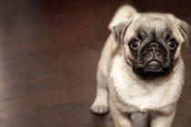 Loša hrana za pse: Odvojite činjenice od netačnih informacija