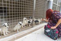 """Goraždansko udruženje za zaštitu životinja """"A.R.B."""" preuzelo lokalni azil i spasilo 130 pasa"""