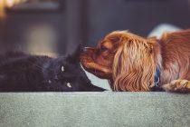 Deset najčešćih zdravstvenih problema kod pasa i mačaka