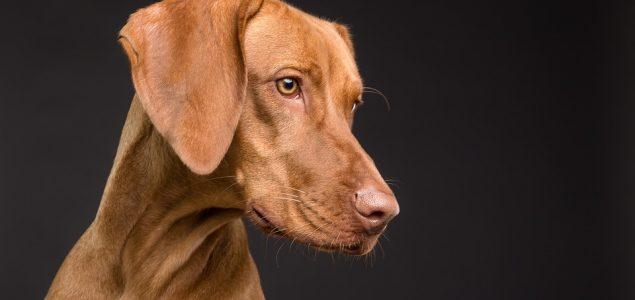 Novo britansko istraživanje: 5 najređih vrsta pasa na svetu