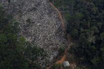 Rekordno krčenje amazonske prašume i dalje se nastavlja