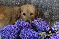 Zašto se psi vole valjati po prljavštini, blatu, pa čak i manjim strvinama?