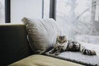 """Koje bolesti su """"tihe"""" ubice mačaka?"""