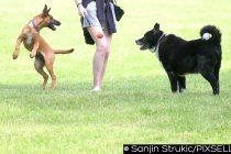 Savjeti veterinara za najčešće probleme koje donosi posjedovanje pasa