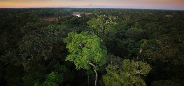 Amazonija: Hiljadama vrsta biljaka i životinja prijeti izumiranje