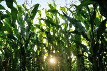 Klimatske promene i ishrana: Da li ćemo planetu spašavati globalnom dijetom?