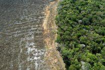 Krčenje šuma u brazilskoj Amazoniji doseglo je najveći godišnji nivo u posljednjoj deceniji