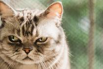 Ako im date izbor, mačke neće ni šapu pomaknuti da bi se potrudile za hranu