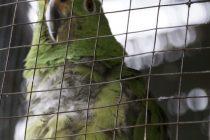 Krijumčarenje egzotičnih životinja u Kolumbiji postao jedan od najunosnijih poslova