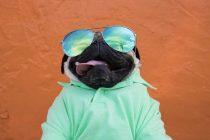 Doug the Pug jedan je od najpopularnijih pasa na Instagramu