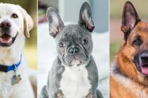 Koje su najpopularnije rase pasa na svijetu